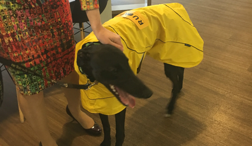 Tommy, the pet pooch, Holding Redlich, RUOK Day